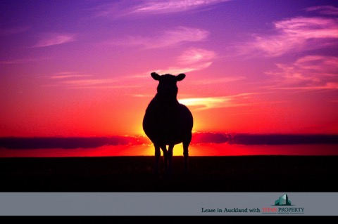 NZ sheep against pink sky - Titan Property