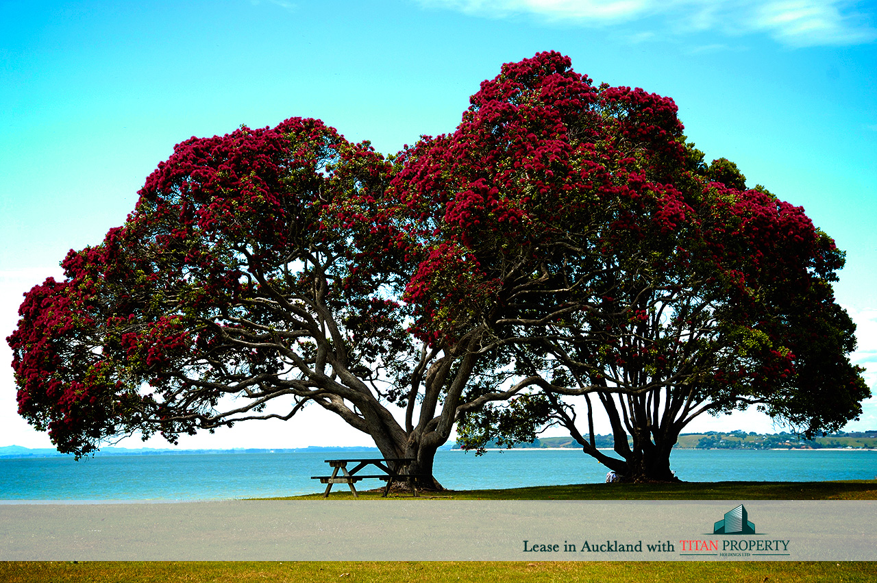 Pohutukawa trees by water - Titan Property